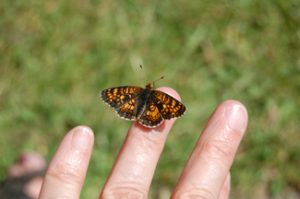 butterfly resting on my finger