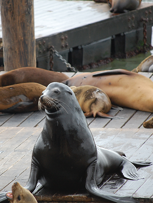 San Francisco, 2019 - Seal