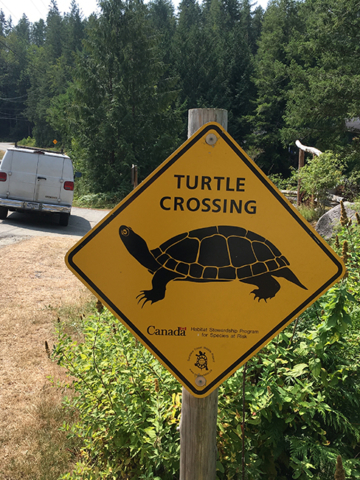 sign turtle crossing
