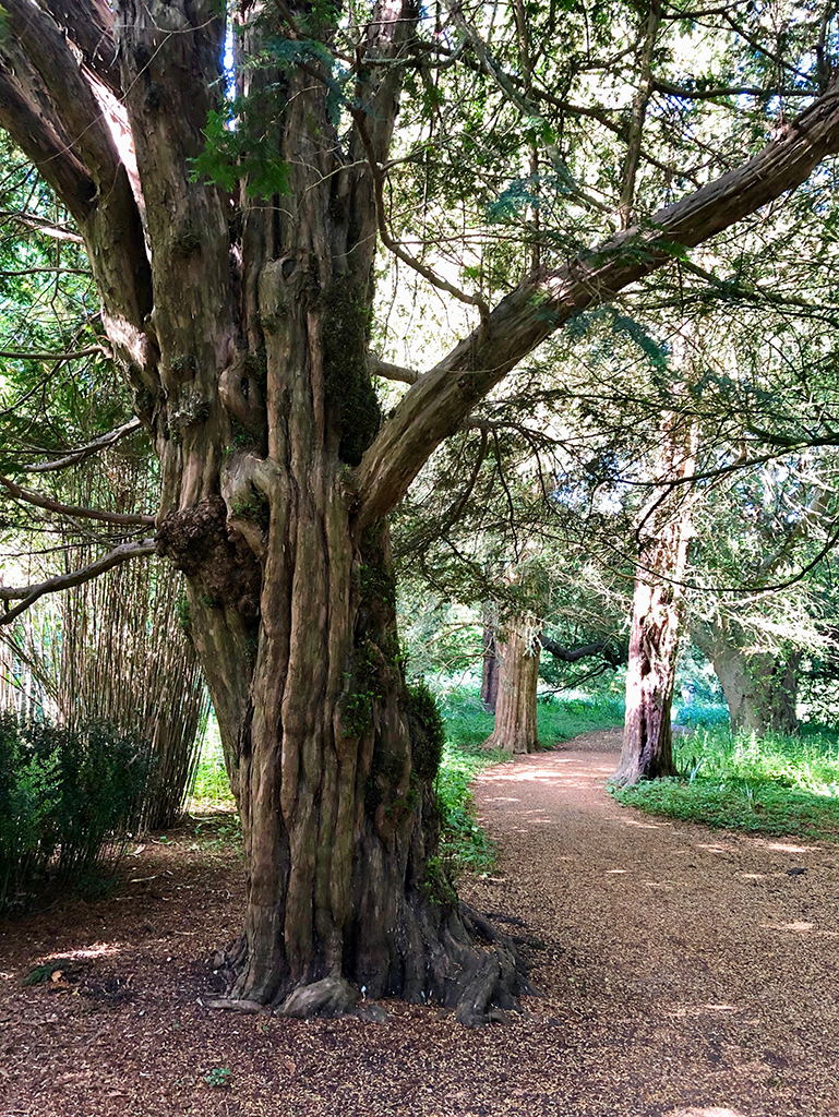 tree in corsham court garden